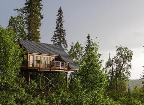 dom na drzewie_budowa domu_20